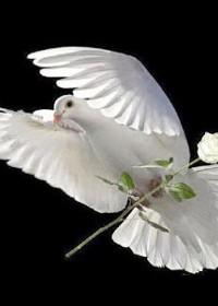 يسوع المسيح والروح القدس